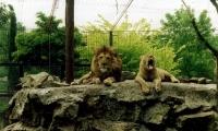 Bienvenidos al Zoo El Paraíso